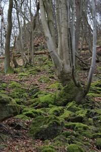 Grün bemooste Hunstein-Felsen